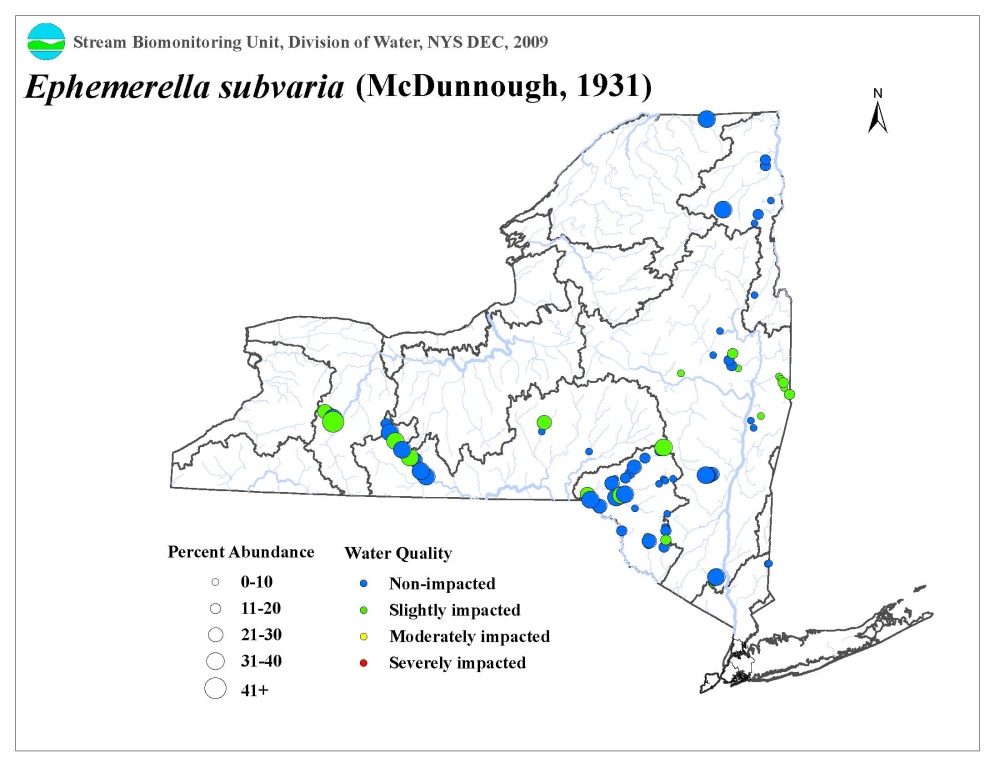Distribution map of the Ephemerella subvaria mayfly in NYS