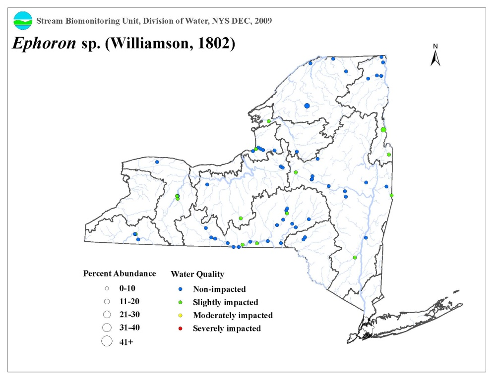 Distribution map of the Ephoron sp. mayfly in NYS