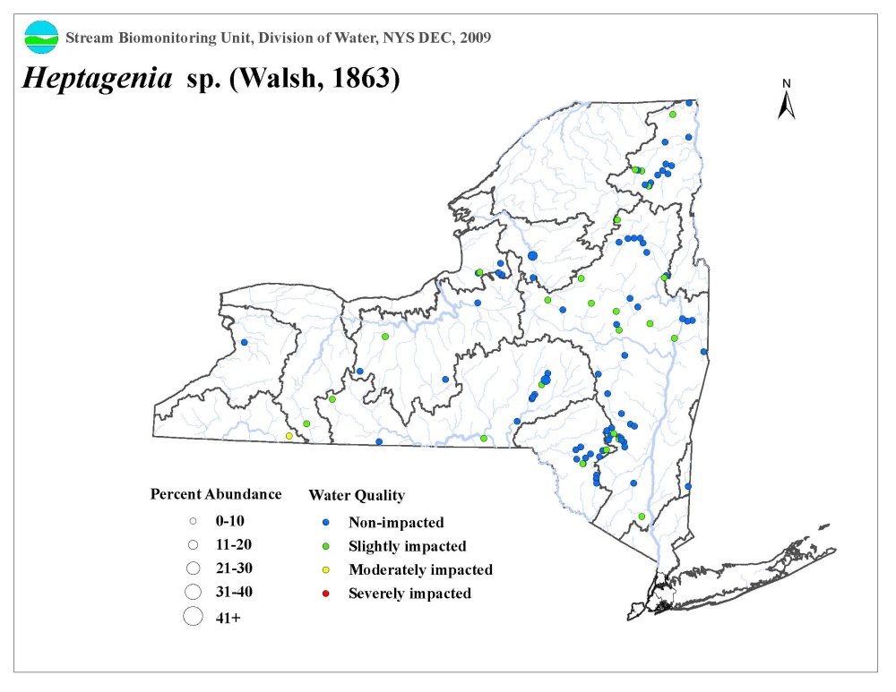 Distribution map of the Heptagenia sp. mayfly in NYS