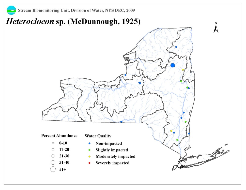 Distribution map of the Heterocloeon sp. mayfly in NYS