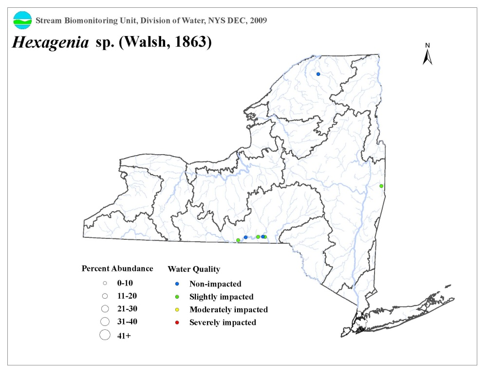 Distribution map of the Hexagenia sp. mayfly in NYS