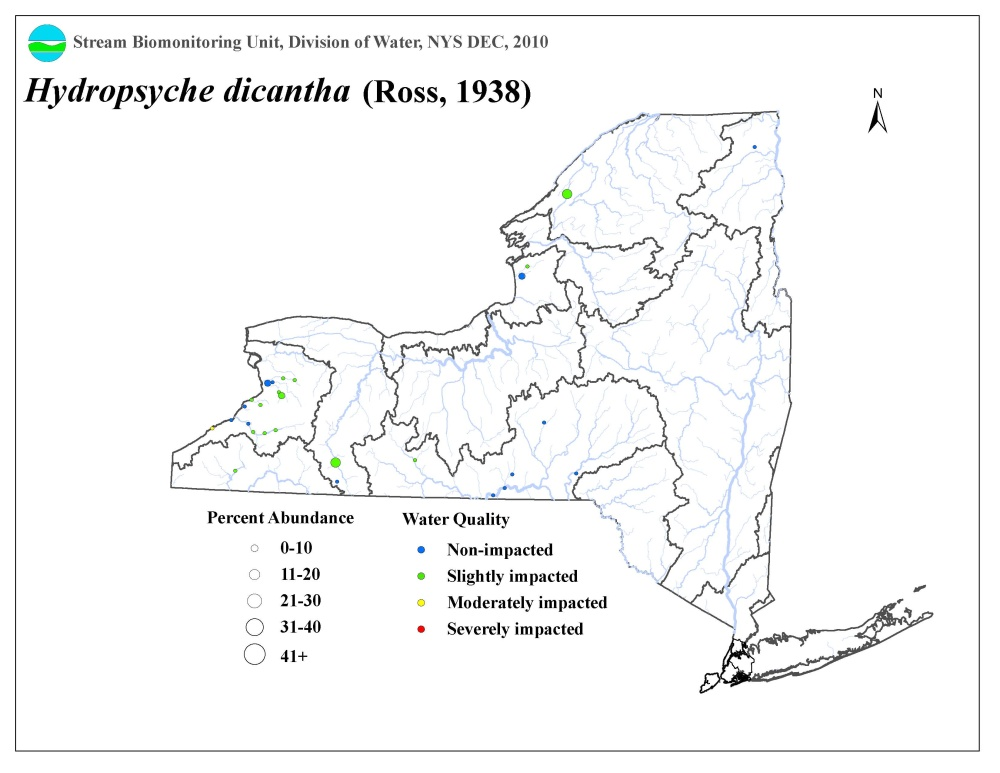 Distribution map of the Hydropsyche dicantha caddisfly in NYS