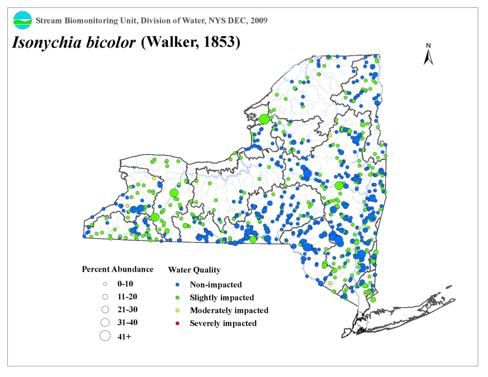 Distribution map of the Isonychia bicolor mayfly in NYS
