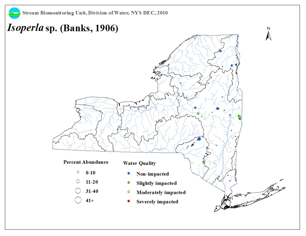 Distribution map of the Isoperla sp. stonefly in NYS