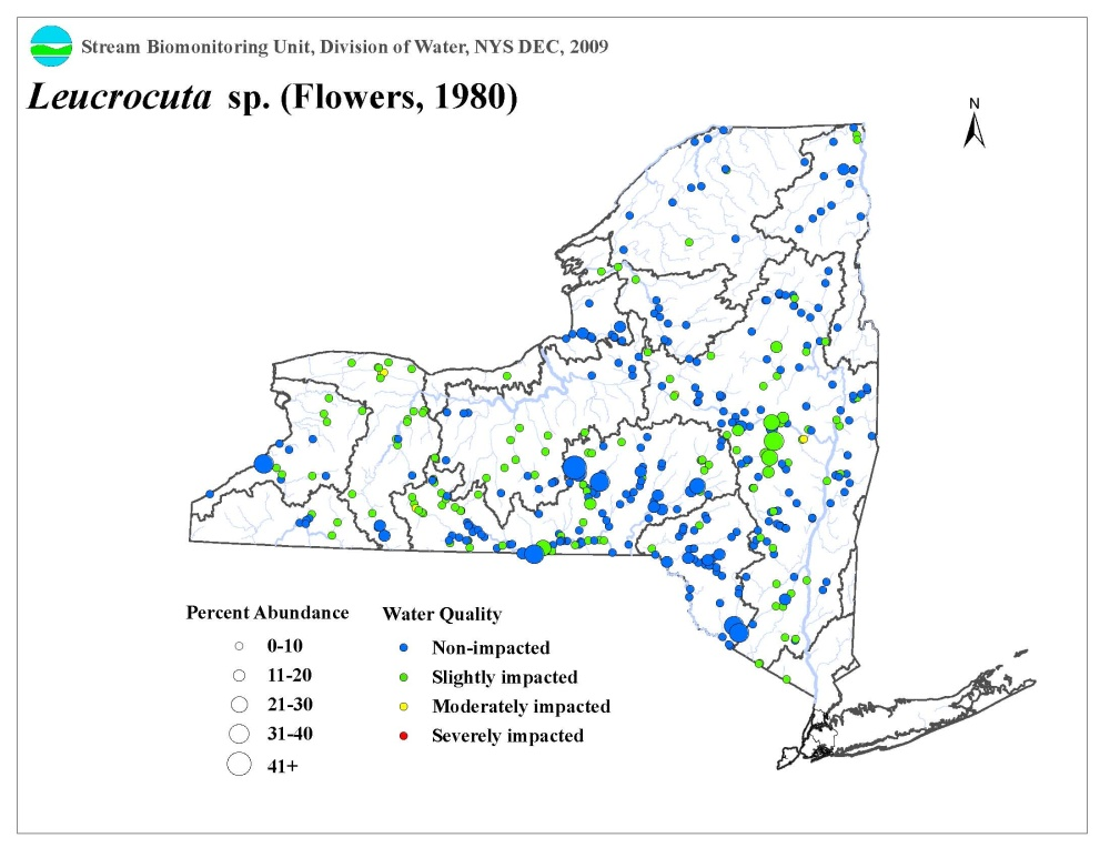 Distribution map of the Leucrocuta sp. mayfly in NYS