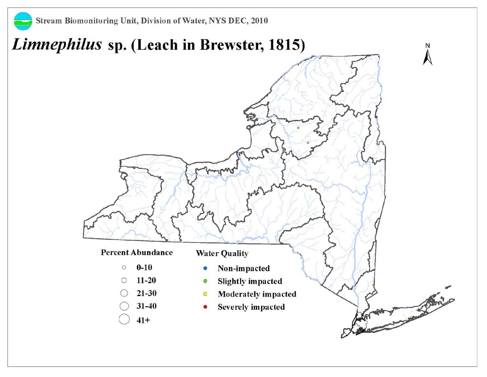 Distribution map of the Limnephilus sp. caddisfly in NYS