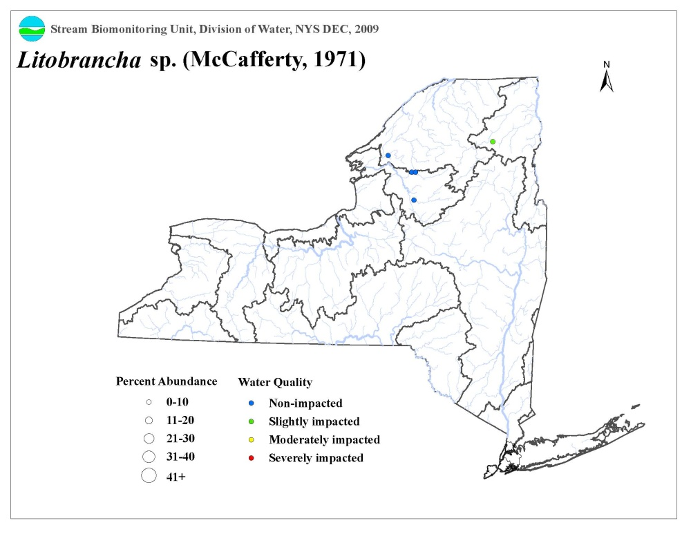Distribution map of the Litobrancha sp. mayfly in NYS