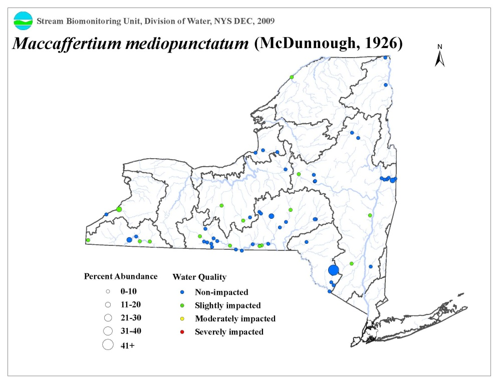 Distribution map of the Maccaffertium mediopunctatum mayfly in NYS
