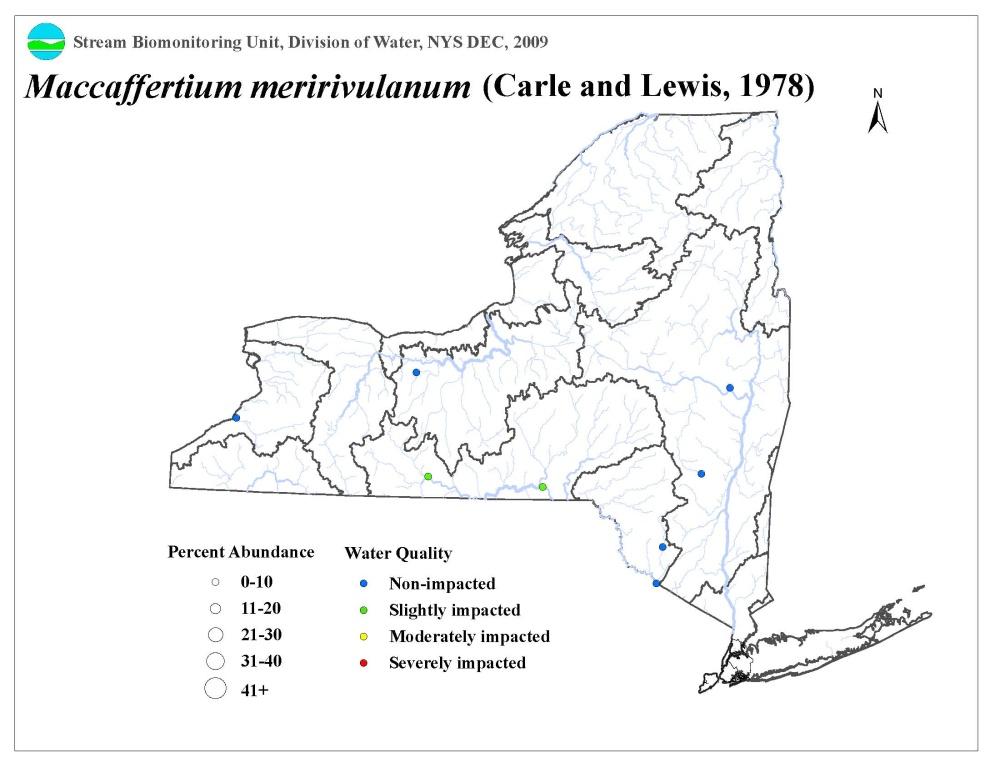 Maccaffertium Meririvulanum Mayfly Distribution Map Nys Dept Of