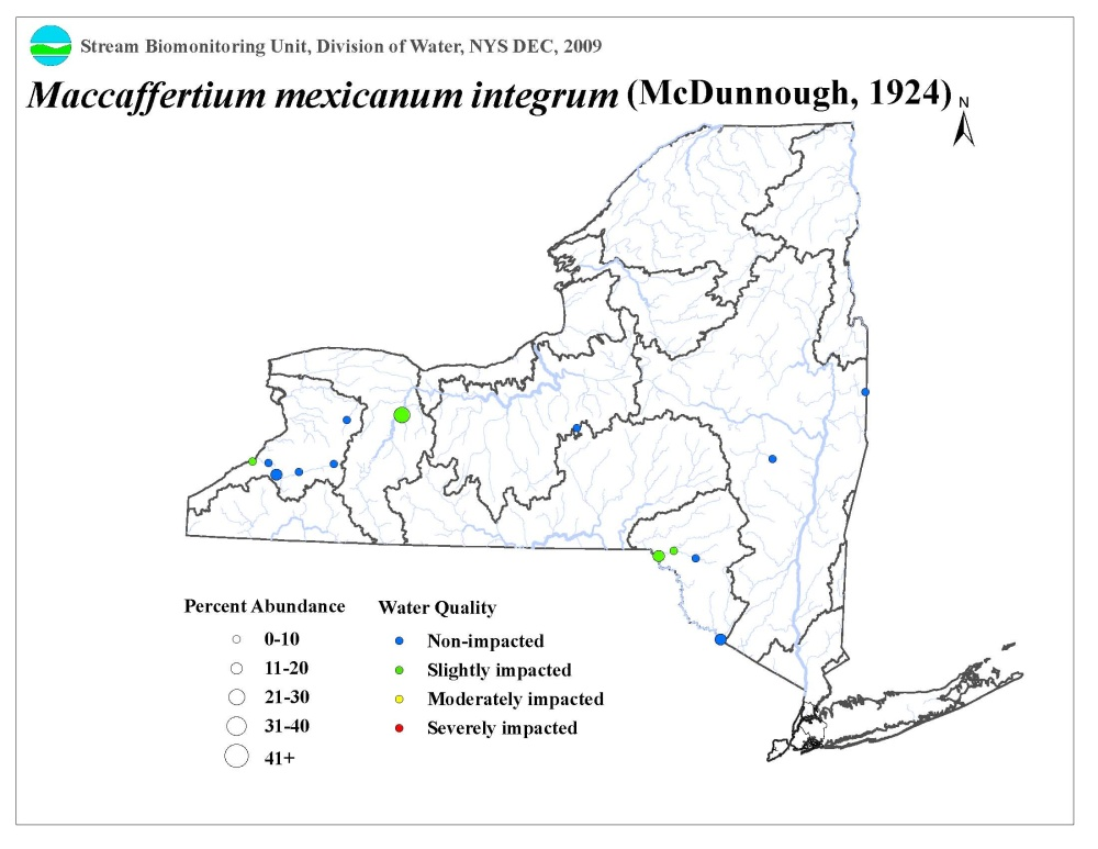 Distribution map of the Maccaffertium mexicanum integrum mayfly in NYS