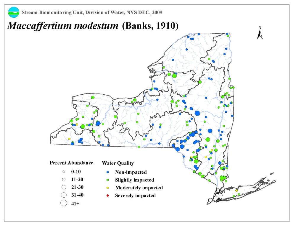 Distribution map of the Maccaffertium modestum mayfly in NYS