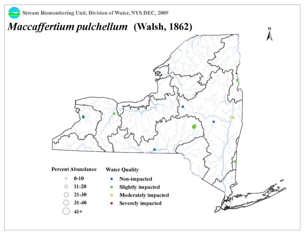 Distribution map of the Maccaffertium pulcheellum mayfly in NYS