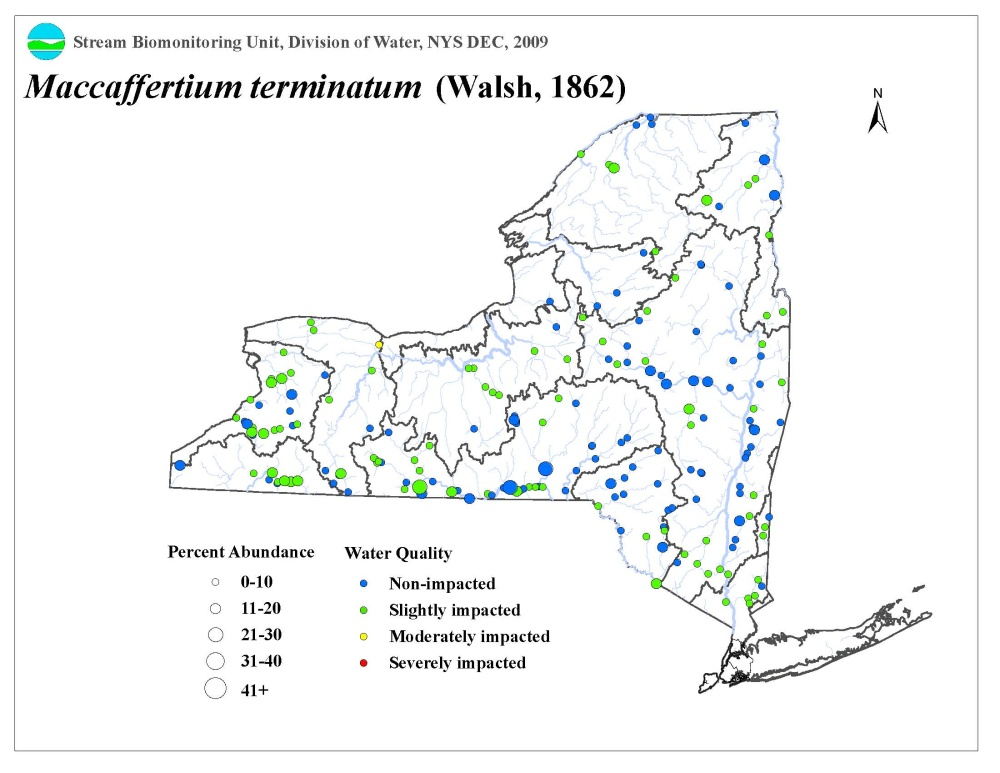 Distribution map of the Maccaffertium terminatum mayfly in NYS