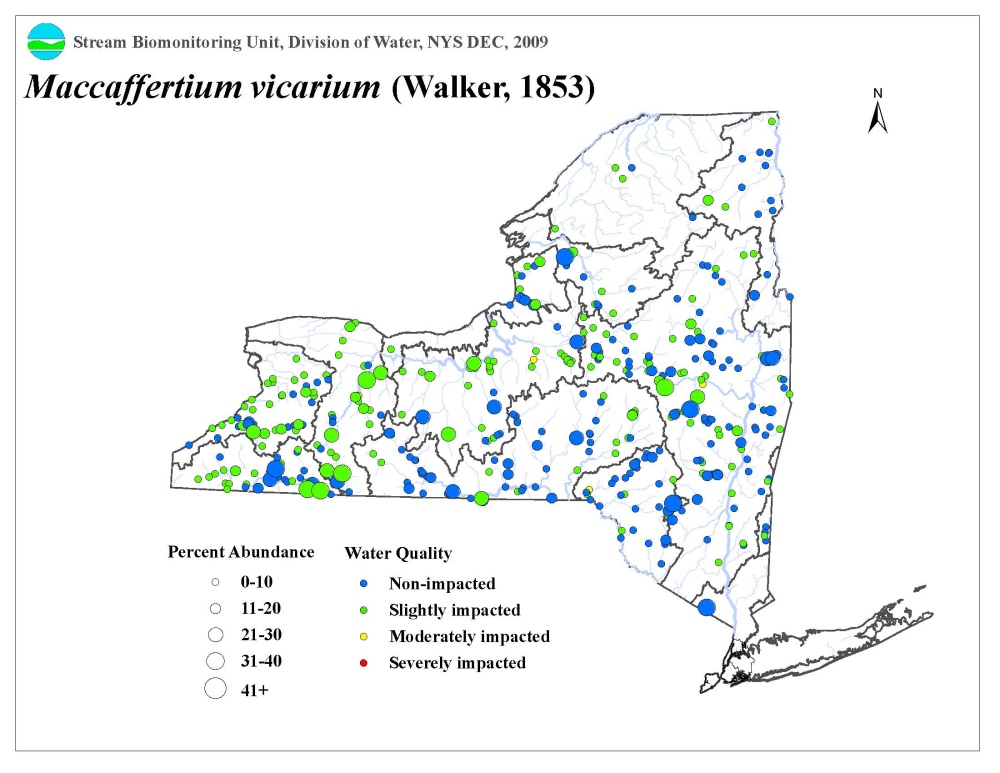 Distribution map of the Maccaffertium vicarium mayfly in NYS