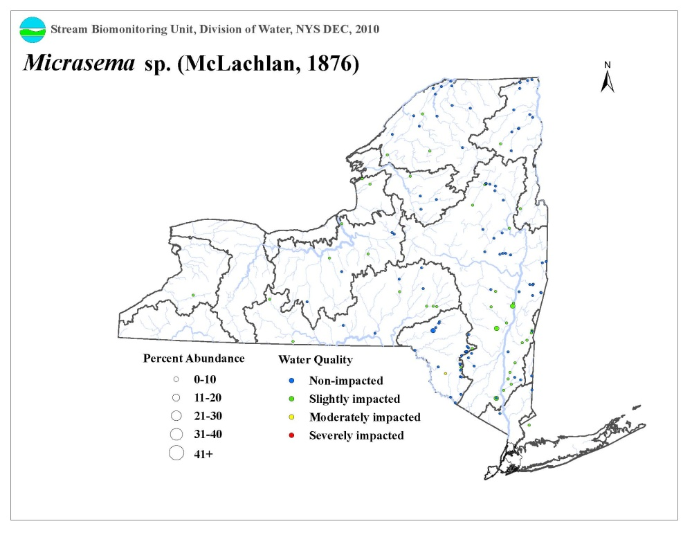 Distribution map of the Micrasema sp. caddisfly in NYS