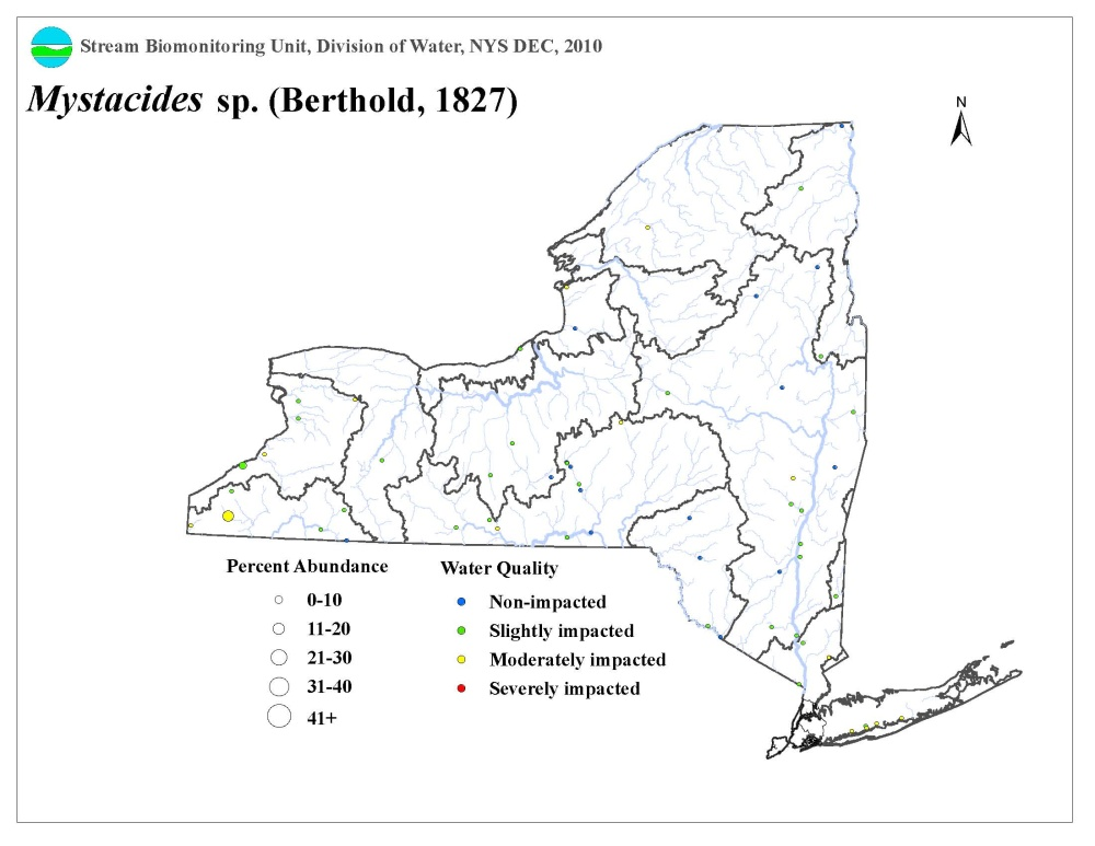 Distribution map of the Mystacides sp. caddisfly in NYS