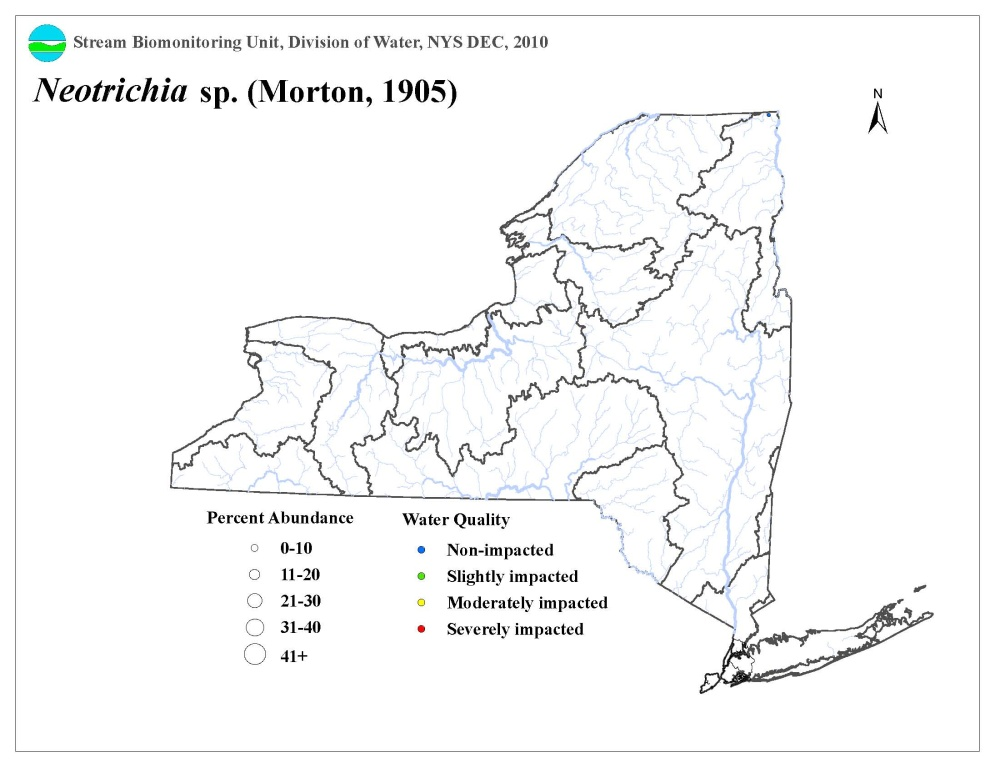 Distribution map of the Neotrichia sp. caddisfly in NYS