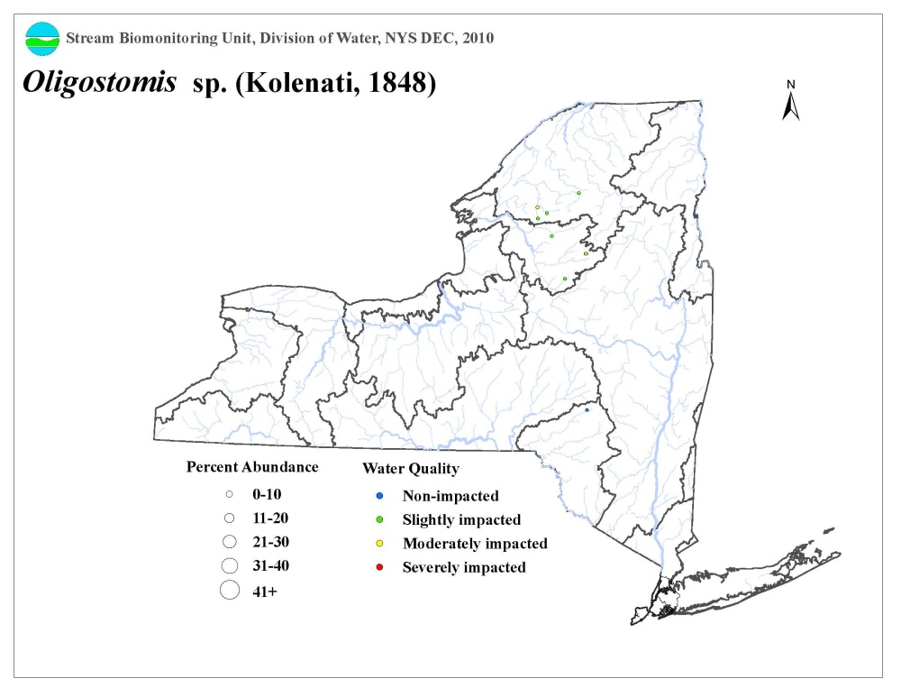 Distribution map of the Oligostomis caddisfly in NYS