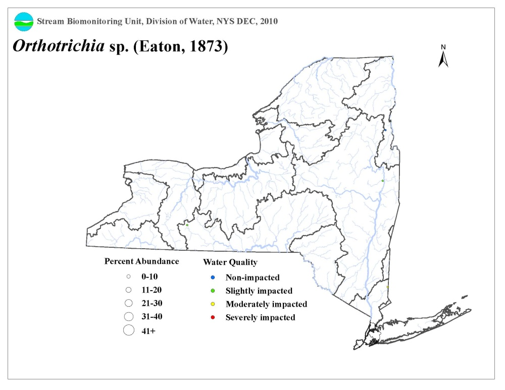 Distribution map of the Orthotrichia sp. caddisfly in NYS