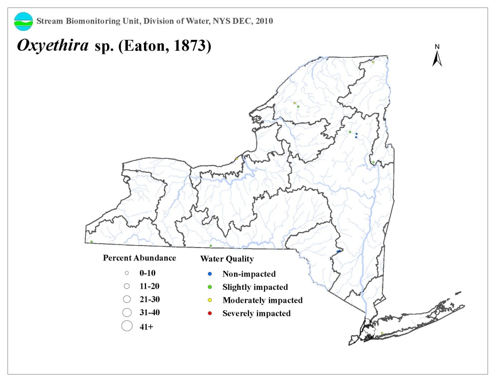 Distribution map of the Oxyethira sp. caddisfly in NYS