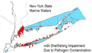 pathogen contamination of shellfish NY map