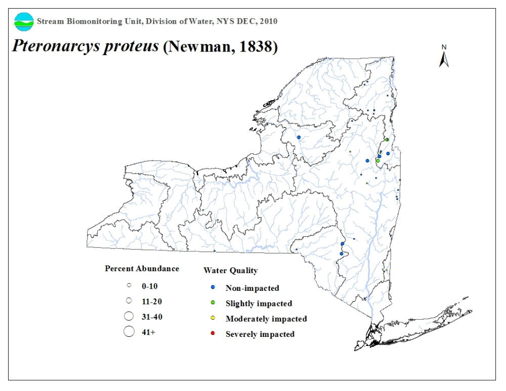 Distribution map of the Pteronarcys proteus stonefly in NYS