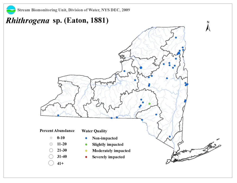 Distribution map of the Rhithrogena sp. mayfly in NYS