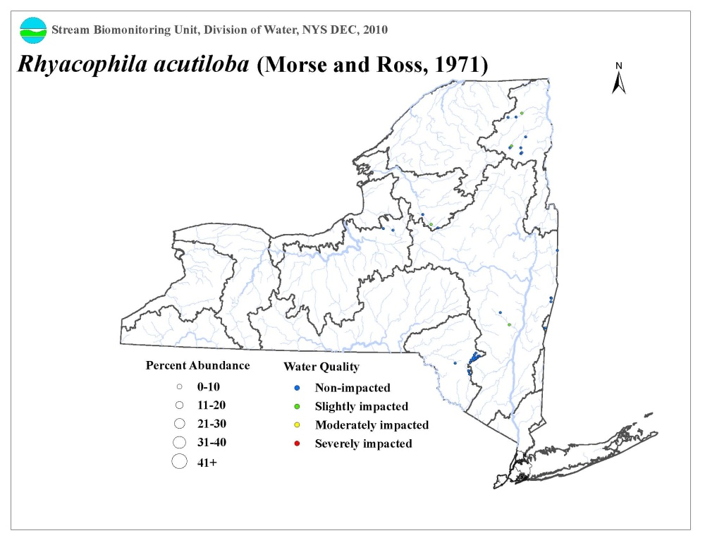 Distribution map of the Rhyacophila acutiloba caddisfly in NYS
