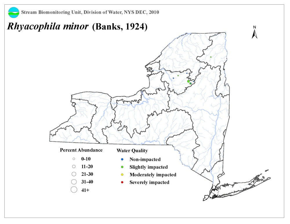 Distribution map of the Rhyacophila minor caddisfly in NYS