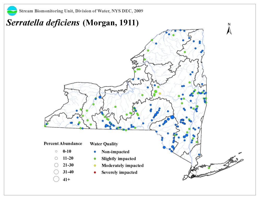 Distribution map of the Serratella deficiens mayfly in NYS