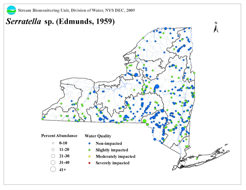 Distribution map of the Serratella sp. mayfly in NYS