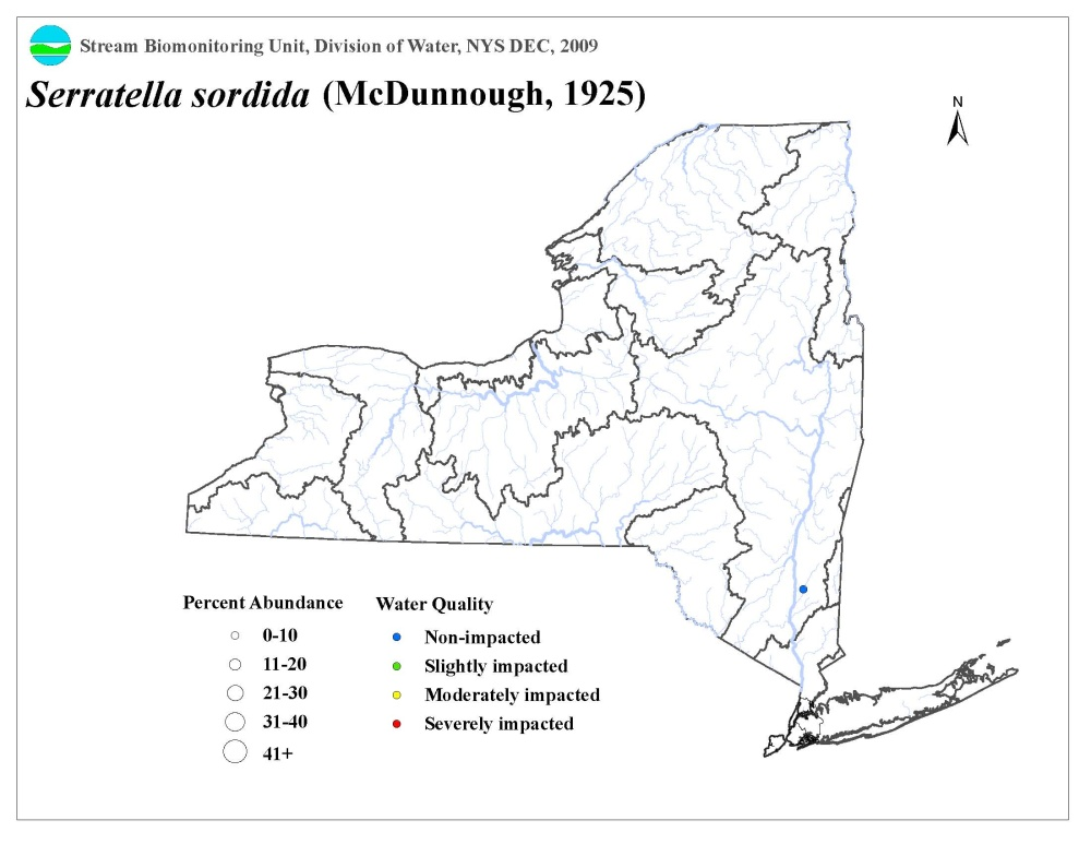 Distribution map of the Serratella sordida mayfly in NYS