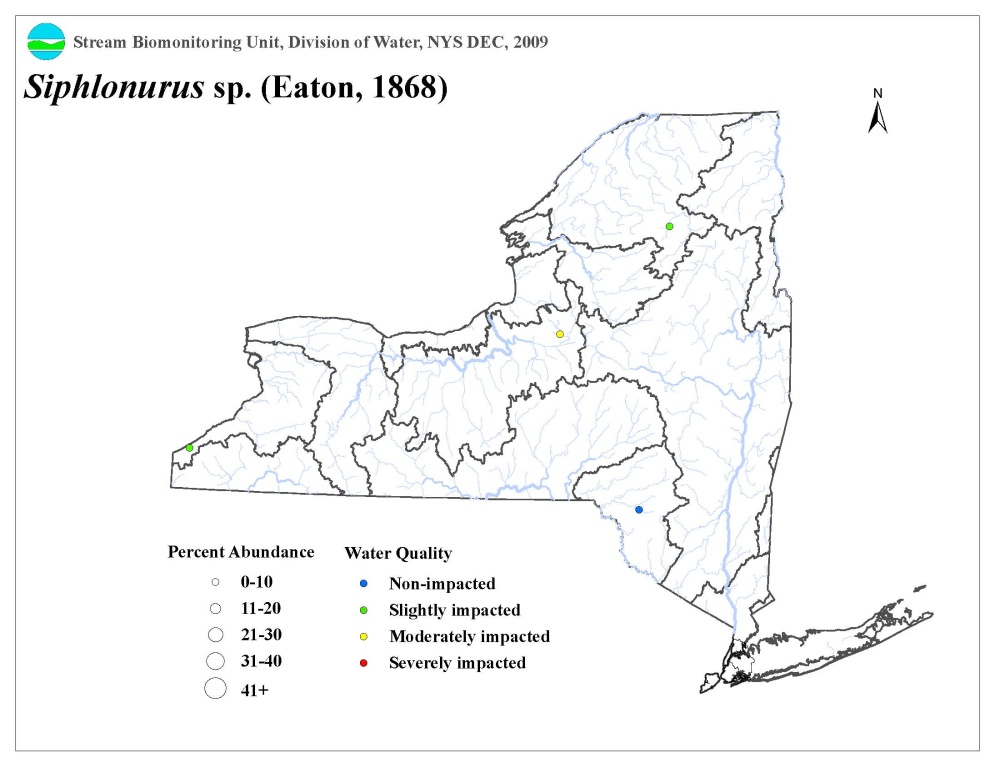 Distribution map of the Siphlonurus sp. mayfly in NYS