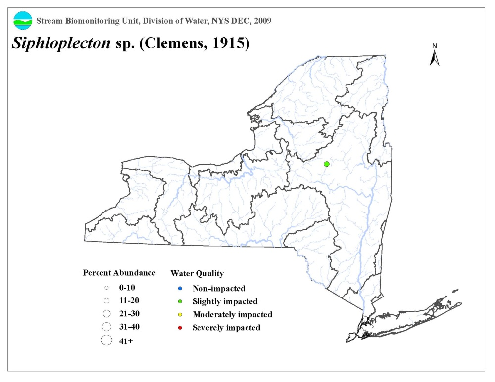 Distribution map of the Siphloplecton sp. mayfly in NYS