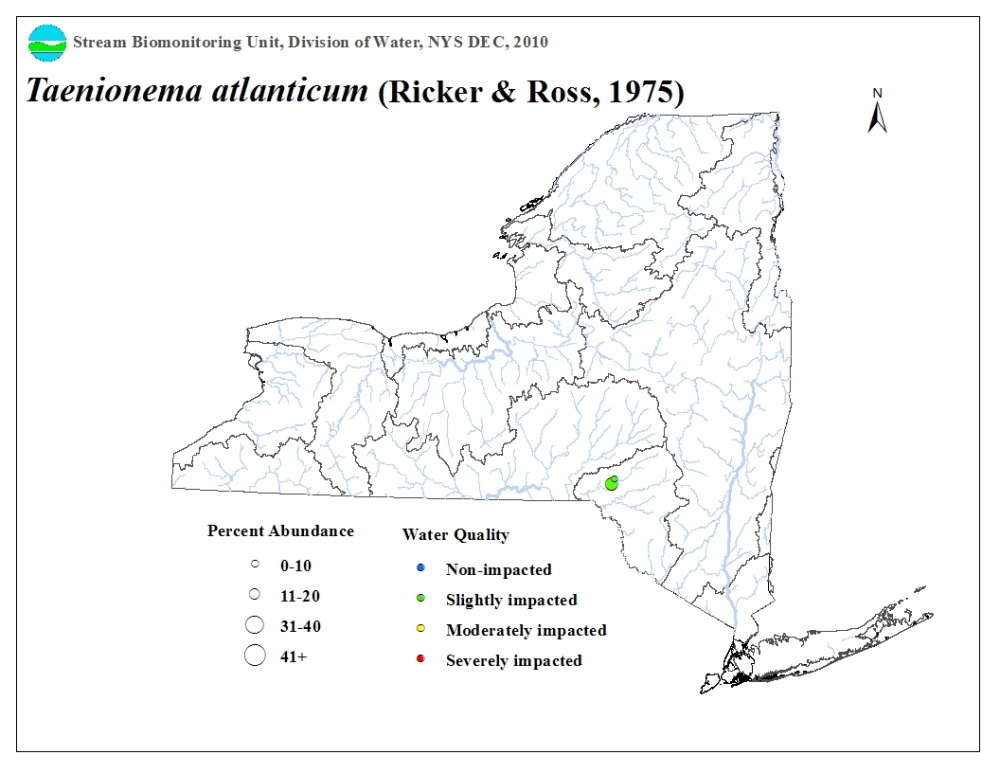 Ditribution map of the Taenionema atlanticum stonefly in NYS