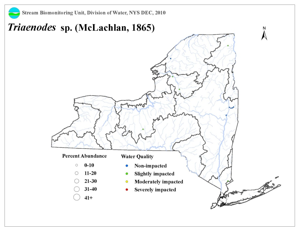 Distribution map of the Triaenodes sp. caddisfly in NYS