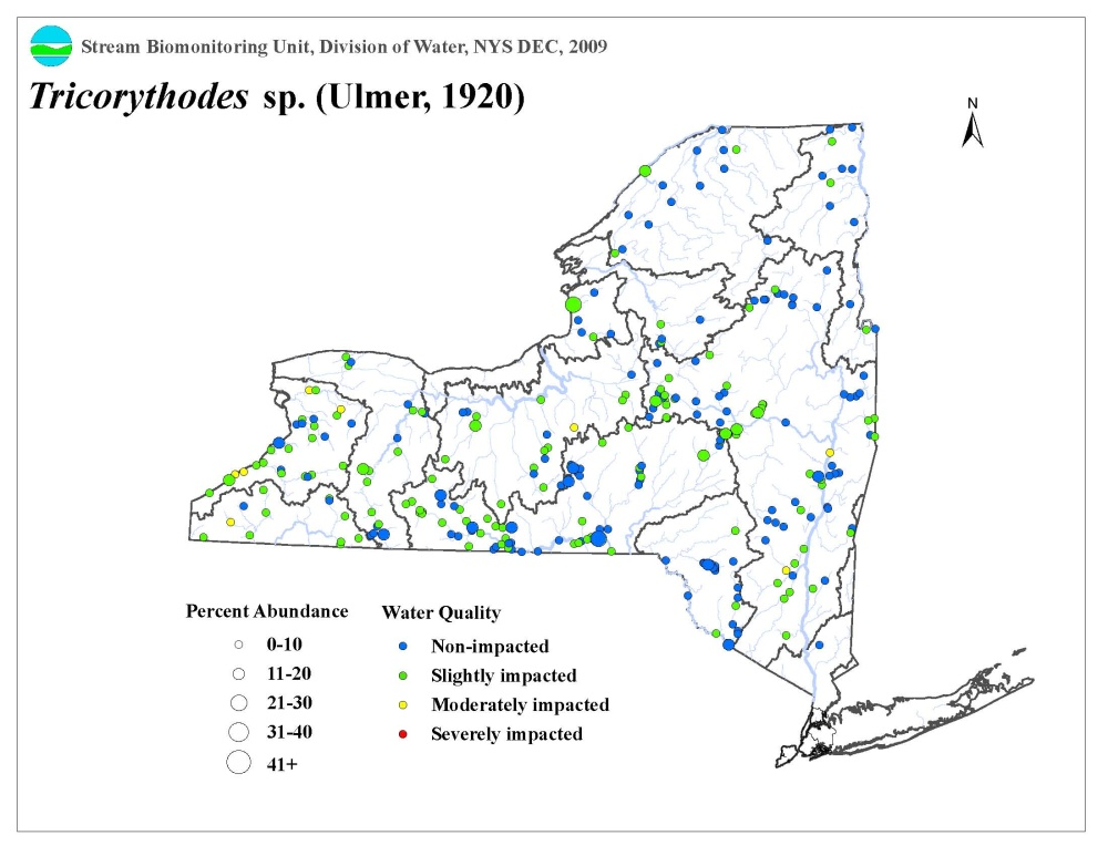 Distribution map of the Tricorythodes sp. mayfly in NYS