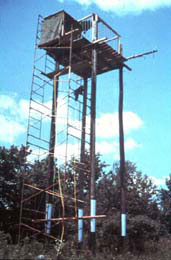 Bald Eagle hacking tower