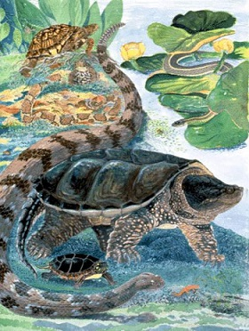 A poster drawing of turtles and snakes by DEC staff Jean Gawalt