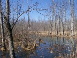 A marsh in Black Creek Marsh WMA.