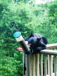 A bear on a porch reaches over to a hanging birdfeeder.