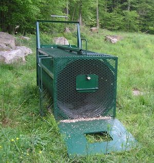 Image of a NYS DEC live bear culvert trap.