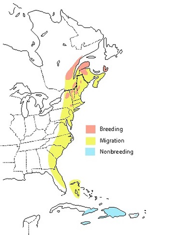 map showing bicknell's thrush breeding range