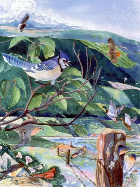 Bird Species  NYS Dept of Environmental Conservation