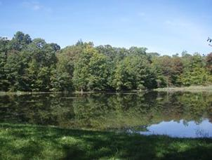 A pond in Bear Spring Mountain WMA.