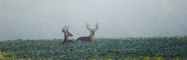 Image of two bucks standing in the fog; photo courtesy of Dick Thomas.