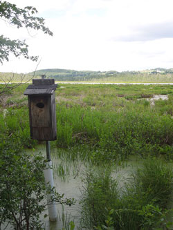 A nest box with a view of Carter's Pond