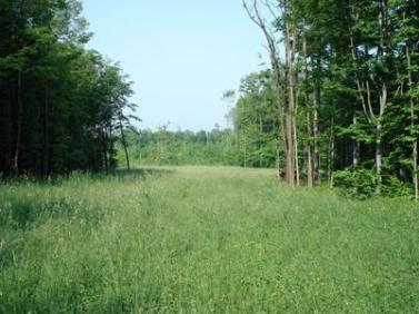 Meadow in Canadaway Creek Wildlife Management Area