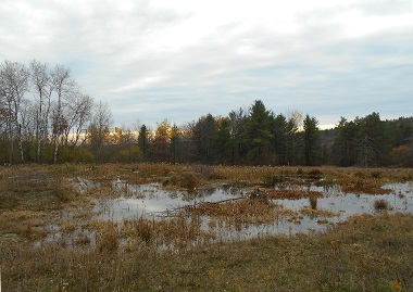 Vernal pool at Connecticut Hill WMA.