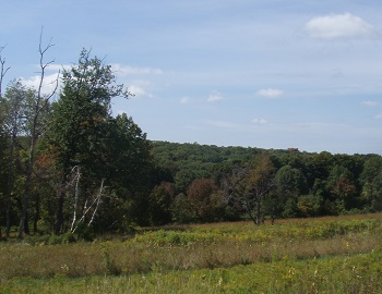 Field and forest at Cranberry Mountain WMA.
